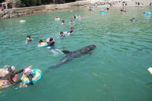 夏だ!! クジラと泳ごう!